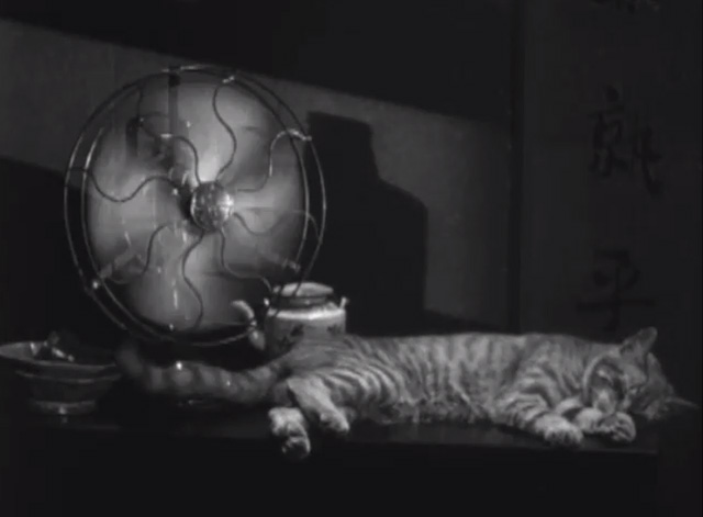 Welcome Danger - tabby cat sleeping beside running electric fan