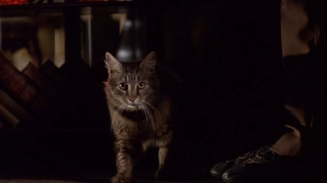 Welcome to Collinwood - long haired tabby cat at man's feet