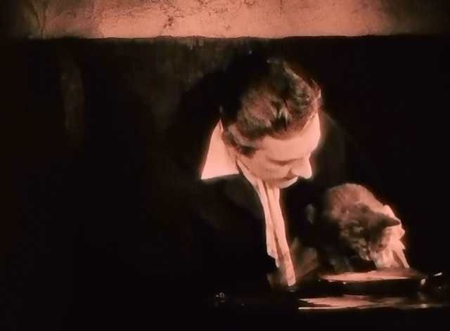 When a Man Loves - tabby kitten Fifi drinking milk with Fabien John Barrymore