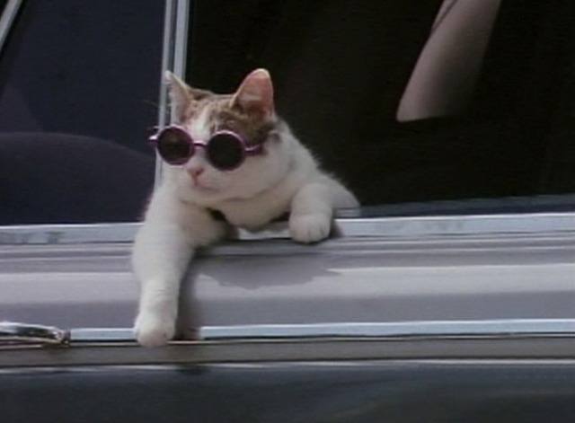 Whiskers cat in limo