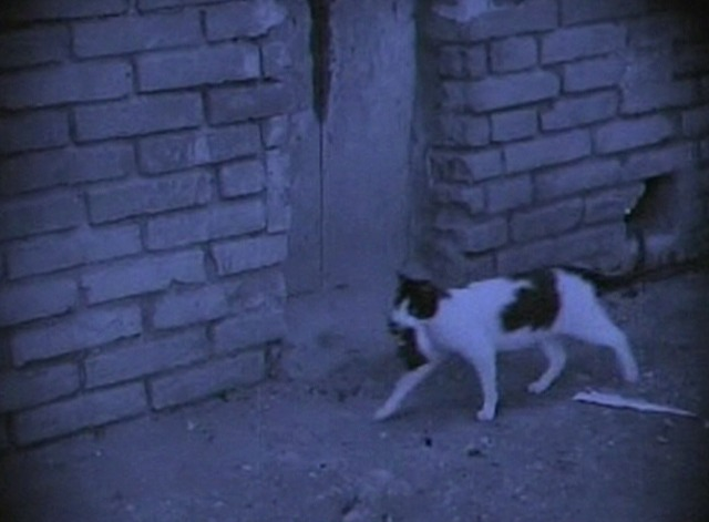 The White Sister - mama cat carries kitten down street