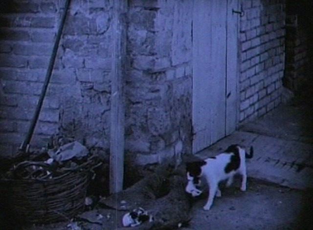 The White Sister - mama cat carries kitten to rest of litter