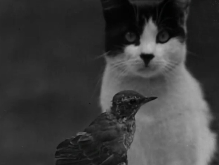 Who Killed Cock Robin? - newsreel of Puffy the cat and injured bird