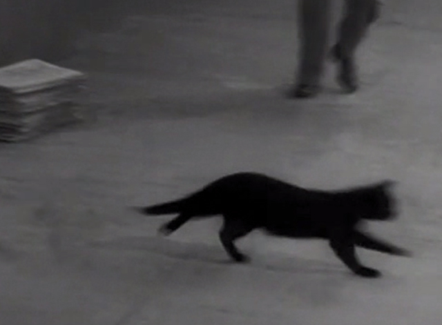 Who's Superstitious? - black cat running across sidewalk