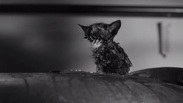 Who Was That Lady? - wet kitten sitting on pipe in basement