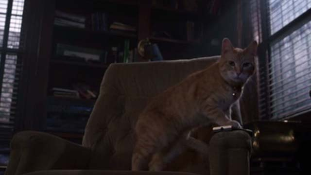 Willard 2003 - orange tabby cat Scully on chair with remote