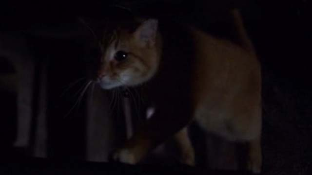 Willard 2003 - orange tabby cat Scully walking between pipe and ceiling