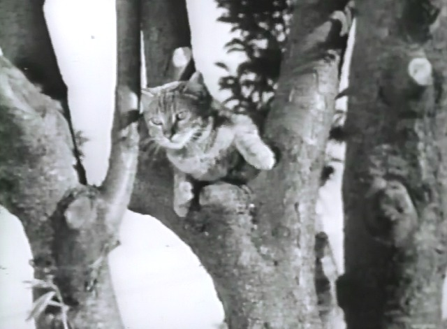 Wing, Claw and Fang! - Bessie the farm cat up a tree