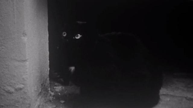 The World of Jacques Demy - black cat possibly Brumaire