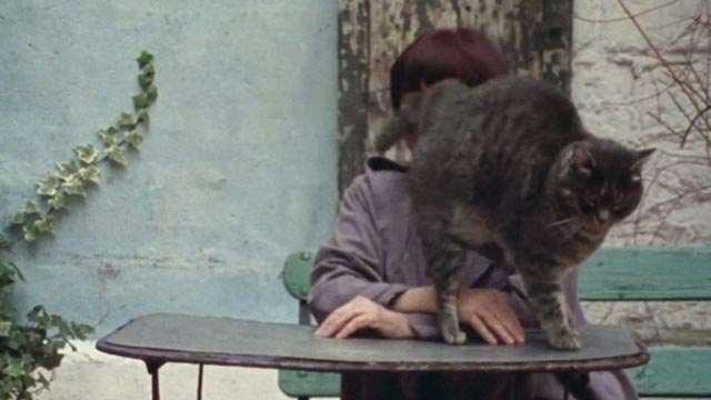 The World of Jacques Demy - Agnès Varda with gray tabby cat Zgougou standing in front of her on table