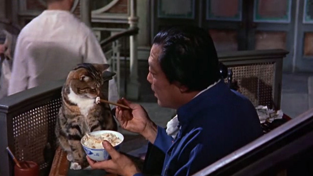 The World of Suzie Wong - Ah Tong Andy Ho feeding tabby cat with chopsticks