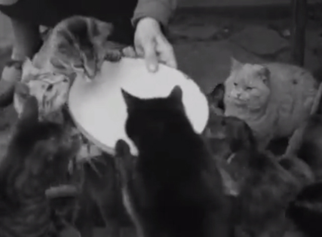 Would You Believe It? No. 7 - numerous cats being fed