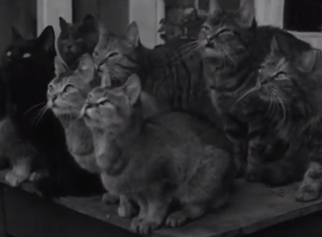 Would You Believe It? No. 7 - numerous cats sitting