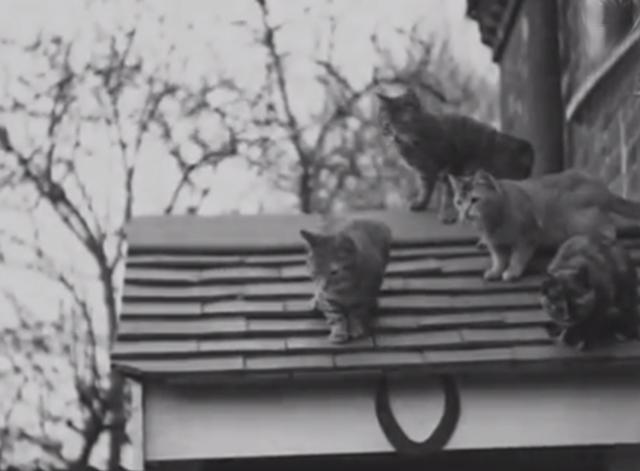 Would You Believe It? No. 7 - several cats on roof