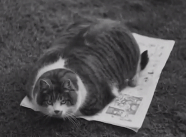 Would You Believe It? No. 7 - Gibson the world's biggest cat