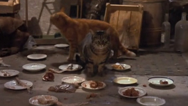 The Wrong Box - cats and food on landing