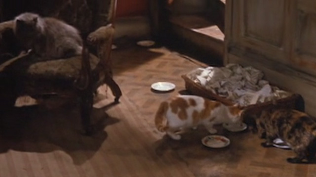 The Wrong Box - cats and food in Doctor Pratt's office