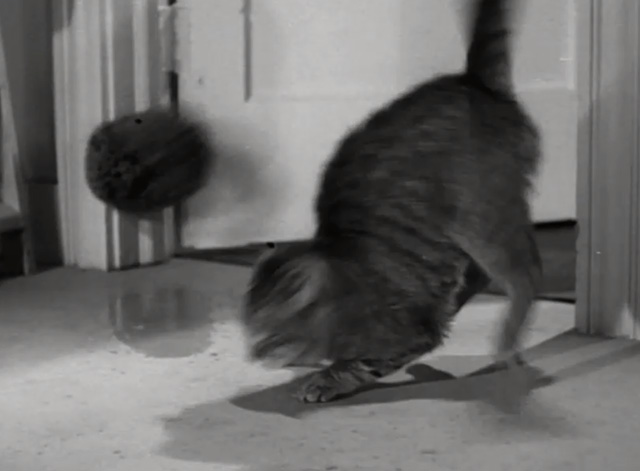 You Never Can Tell - tabby cat Boots being hit with wet sponge