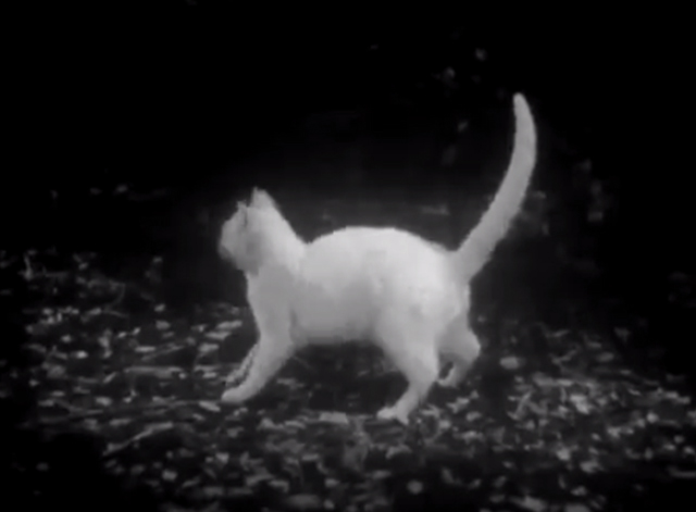 You're Next! - white cat standing in woods