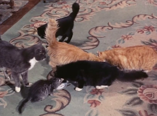 Adventures of Superman - Olsen's Millions - group of cats around dish of milk on floor