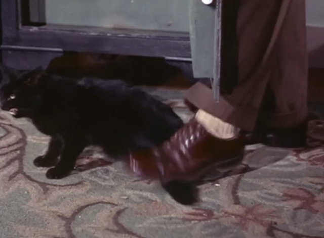 Adventures of Superman - Olsen's Millions - Jimmy Olsen accidentally stepping on black cat