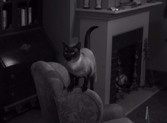 Alfred Hitchcock Presents - The Big Switch - Siamese cat Schultz on back of chair