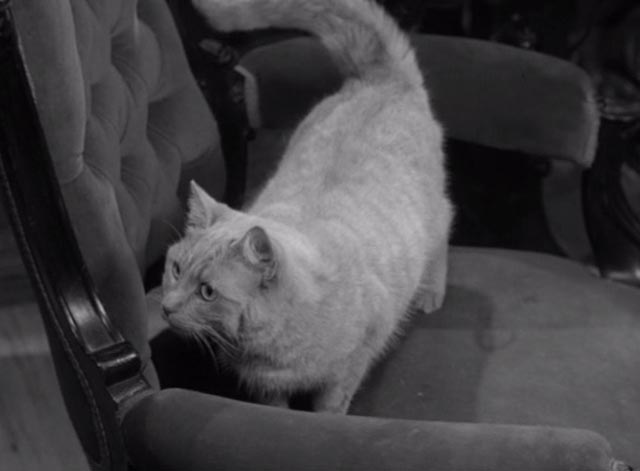 Alfred Hitchcock Presents - The Orderly World of Mr. Appleby - orangy tabby cat Dicky on chair