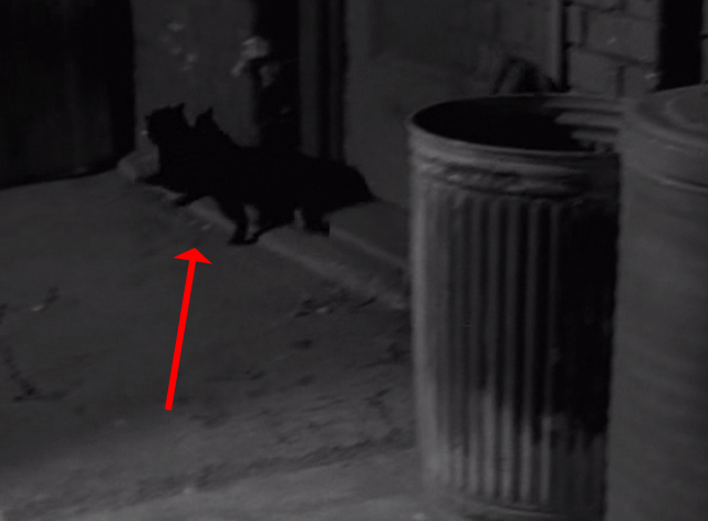 Alfred Hitchcock Presents - Out There Darkness - black cat jumping off garbage can and running away
