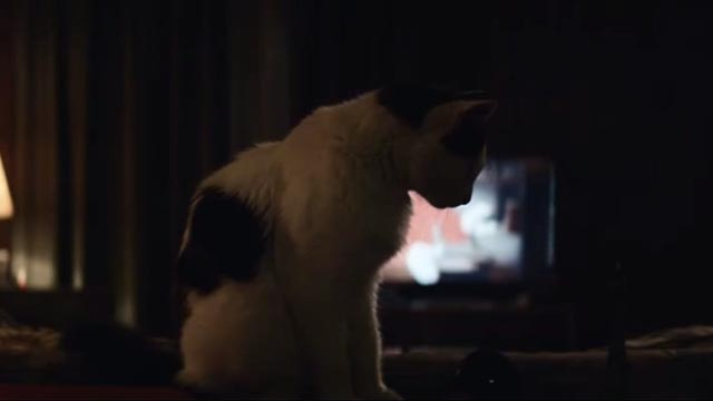 American Gods - Git Gone - long-haired tuxedo cat Dummy in front of television