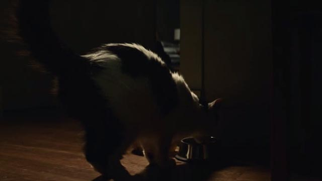 American Gods - Git Gone - long-haired tuxedo cat Dummy drinking from bowl