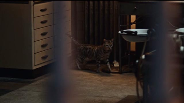 American Gods - Git Gone - small tabby cat in funeral parlor