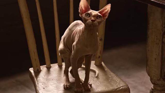 American Gods - Head Full of Snow - Sphynx cat sitting on chair at table