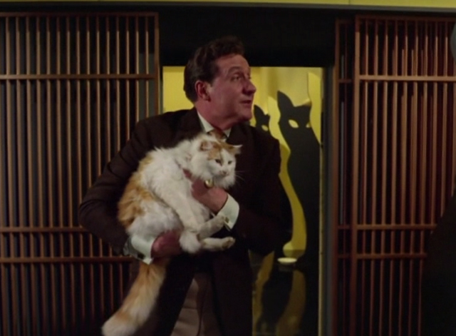 The Avengers - The Hidden Tiger - Steed Patrick Mcnee holding orange and white long haired cat