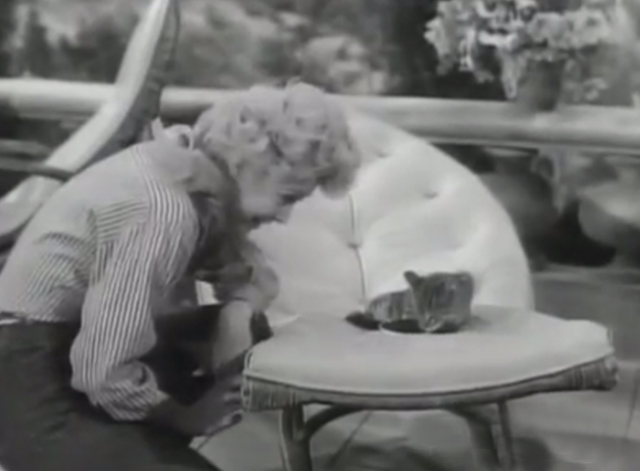 The Beverly Hillbillies - Another Neighbor - Elly May Donna Douglas with tabby kitten Tommy drinking from bowl of water on lawn chair