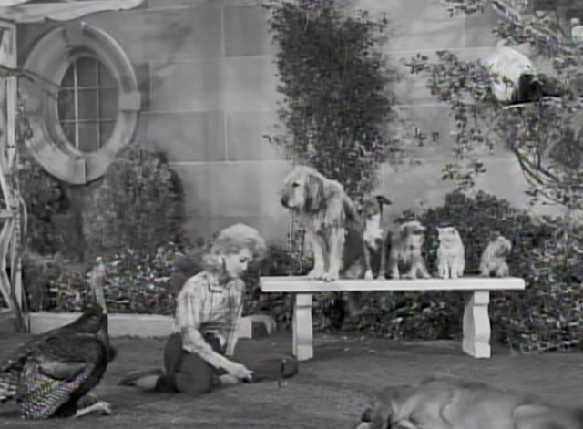 The Beverly Hillbillies - Dash Riprock, You Cad - Elly May Donna Douglas with critters in back yard