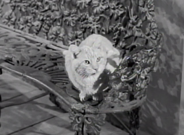 The Beverly Hillbillies - Drysdale's Dog Days - Rusty cat Orangey on bench