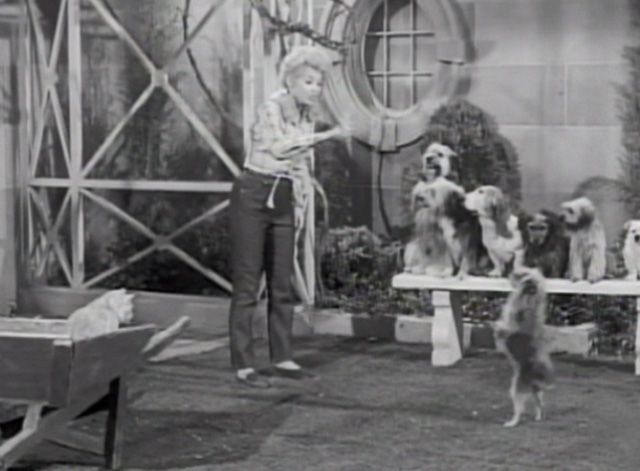 The Beverly Hillbillies - Drysdale's Dog Days - Elly May Donna Douglas teaching dogs as Rusty cat Orangey watches from wheelbarrow