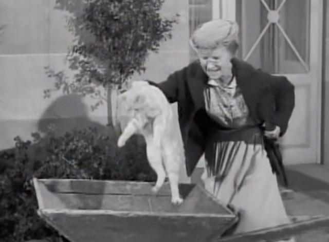 The Beverly Hillbillies - Drysdale's Dog Days - Granny Irene Ryan lifting Rusty cat Orangey out of wheelbarrow