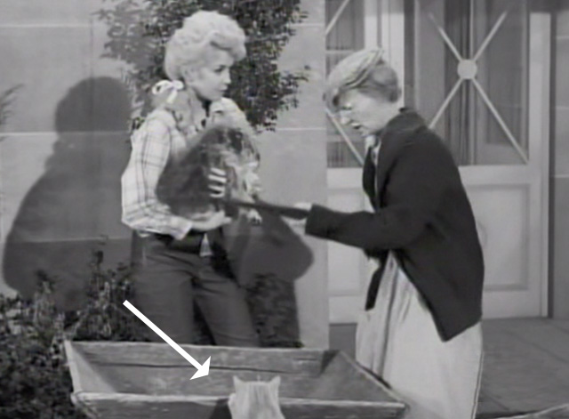 The Beverly Hillbillies - Drysdale's Dog Days - Granny Irene Ryan talking to Elly May Donna Douglas with Rusty cat Orangey trying to get back in wheelbarrow