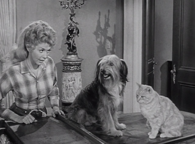 The Beverly Hillbillies - Elly's Animals - Orangey Rusty cat with dog sitting on piano with Elly May Donna Douglas