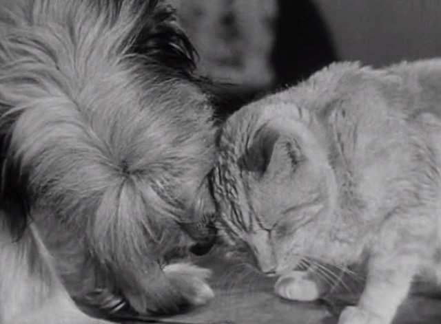 The Beverly Hillbillies - Elly's Animals - Orangey Rusty cat and dog rubbing heads