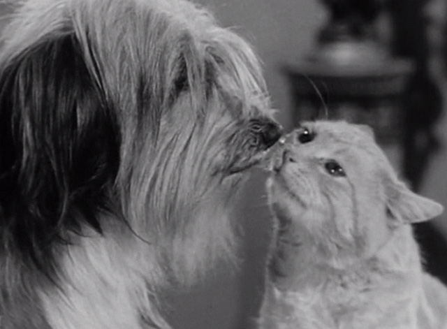The Beverly Hillbillies - Elly's Animals - Orangey Rusty cat with dog kissing