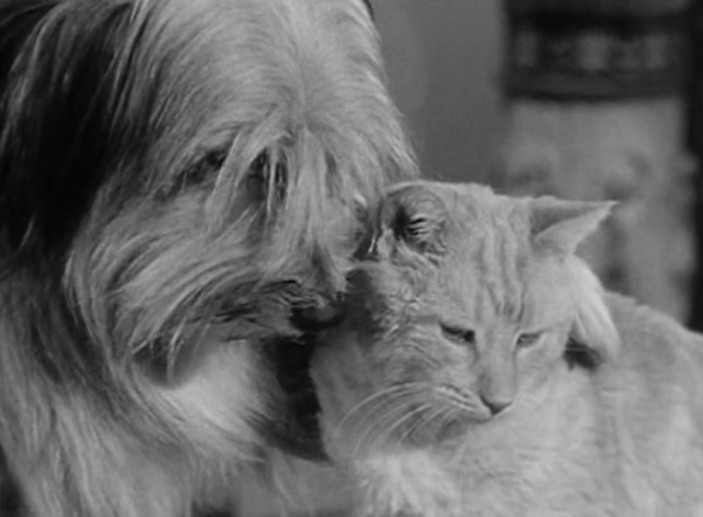 The Beverly Hillbillies - Elly's Animals - Orangey Rusty cat with dog's paw around shoulder