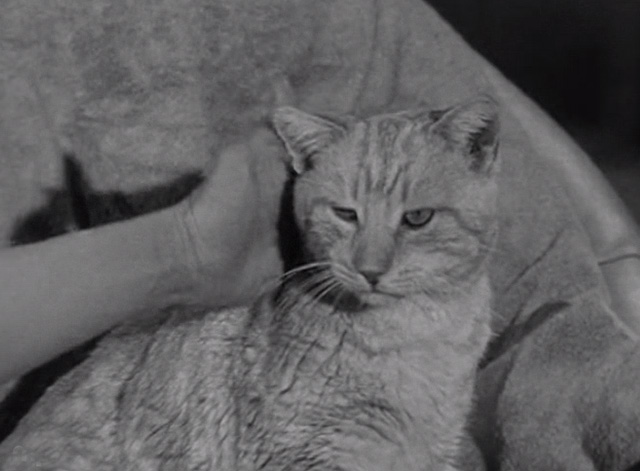The Beverly Hillbillies - Elly's Animals - Orangey Rusty cat being petted