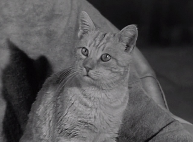 The Beverly Hillbillies - Elly's Animals - Orangey Rusty cat looking curious