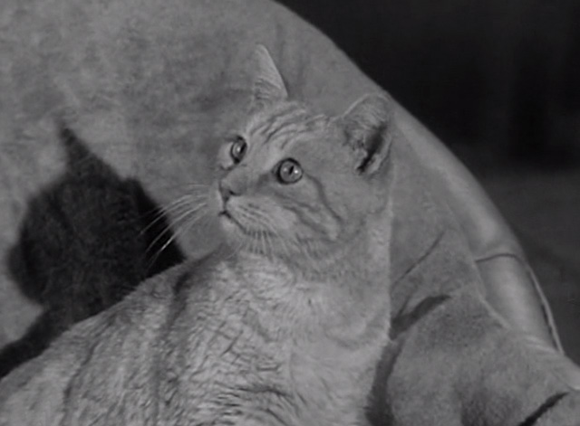The Beverly Hillbillies - Elly's Animals - Elly May Donna Douglas Orangey Rusty cat looking interested