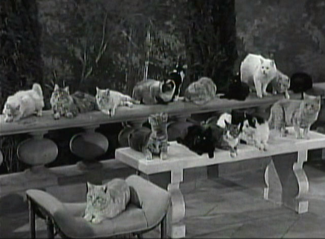 The Beverly Hillbillies - The Clampetts Go Fishing - Rusty cat Orangey sitting with numerous cats