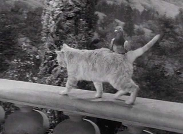 The Beverly Hillbillies - Jed Plays Solomon - Rusty cat Orangey walking with pigeon on back