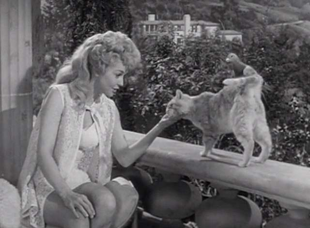 The Beverly Hillbillies - Jed Plays Solomon - Rusty cat Orangey standing with pigeon on back petted by Elly May Donna Douglas