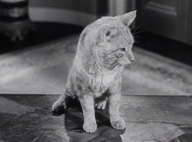 The Beverly Hillbillies - The Clampett's are Overdrawn - Rusty cat Orangey on table